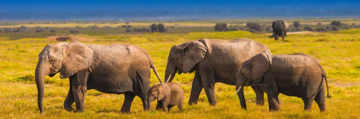 amboseli national park elephant herds