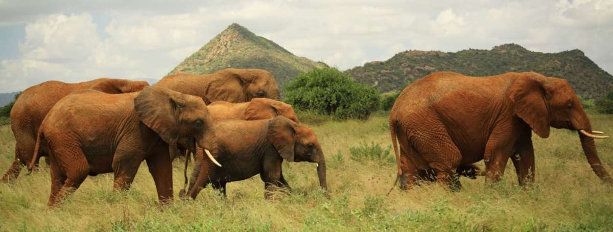 Kenya wildlife trails budget safari