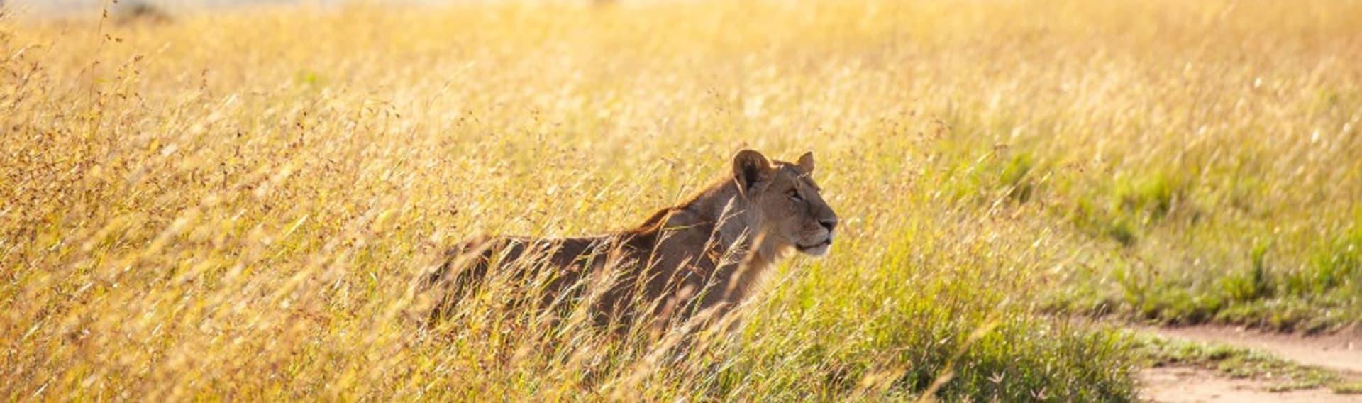 12 days/11 nights Kenya wildlife safari