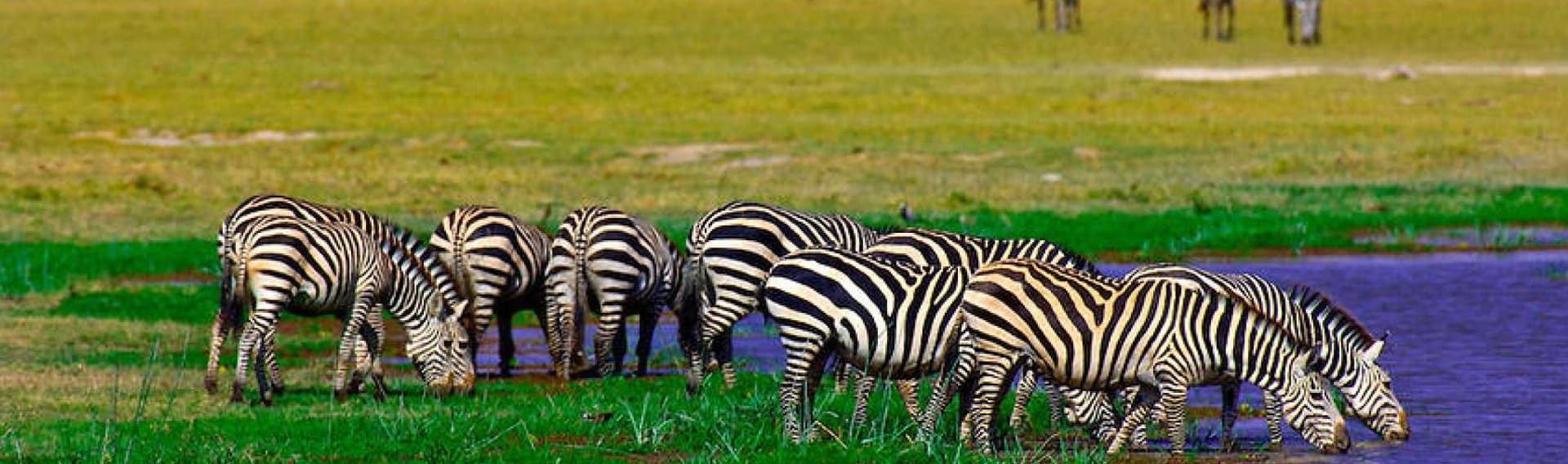 Kenya and Tanzania scheduled group safari
