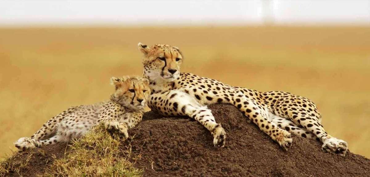 Small group joining safaris in Kenya and Tanzania