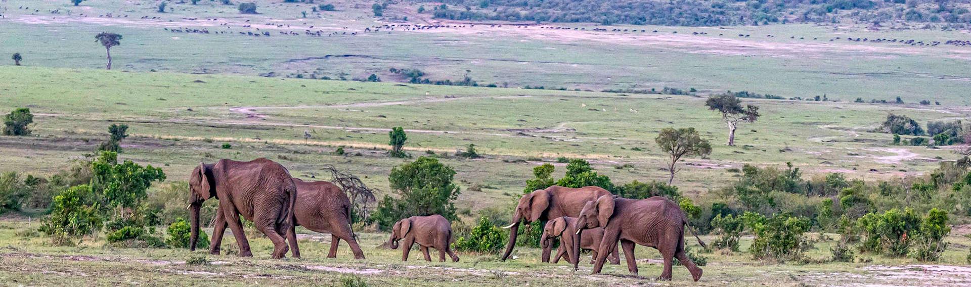 Tsavo West-Amboseli-Naivasha -Masai Mara-Kenya Budget Lodge safari