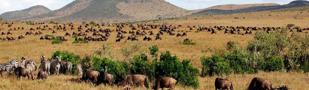 Masai Mara Wildebeest Migration safari and Rwanda Gorilla tour