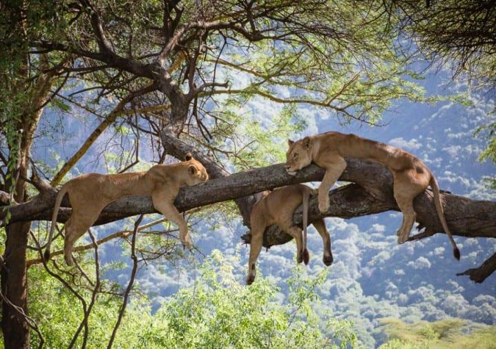 Best of Kenya and Tanzania game parks & Rwanda Gorillas trekking safari