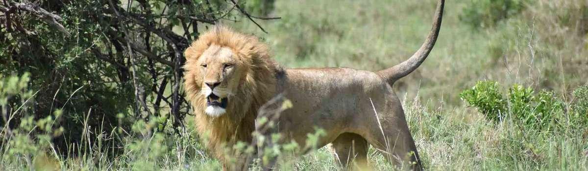 Aberdares, Sweetwater's, Lake Nakuru Masai Mara safari