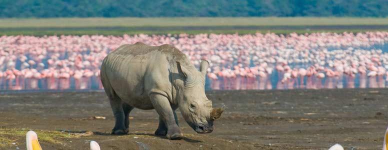 Discover Kenya Wildlife Lodge Safari