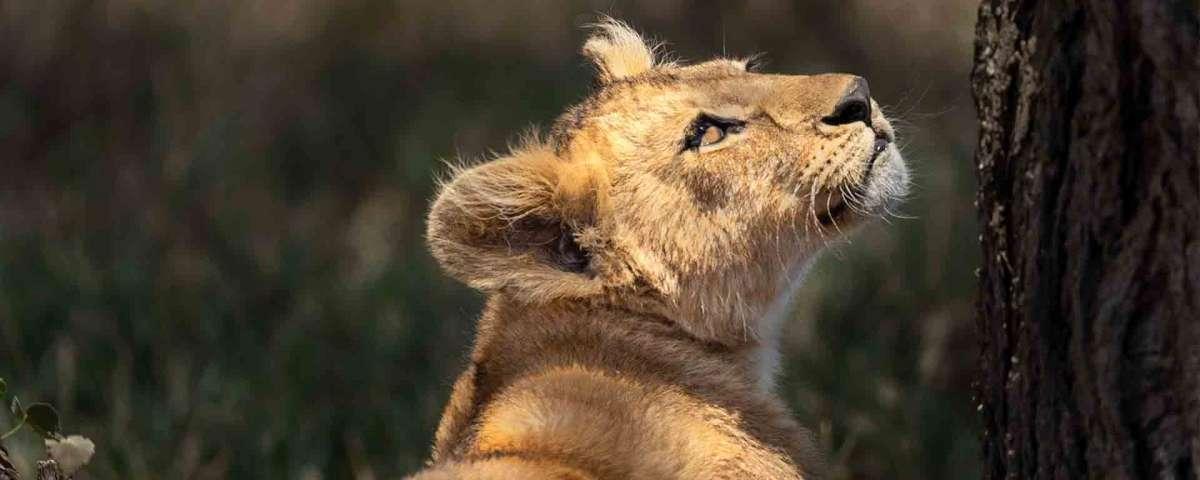 Lake Manyara Serengeti Ngorongoro Budget lodge Safari