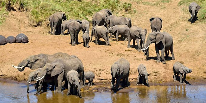 Adventure Kenya and Tanzania combined safari