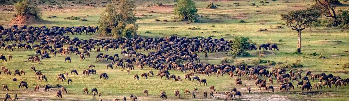 wildebeest migration safaris |the great wildebeest migration in Masai Mara and Serengeti
