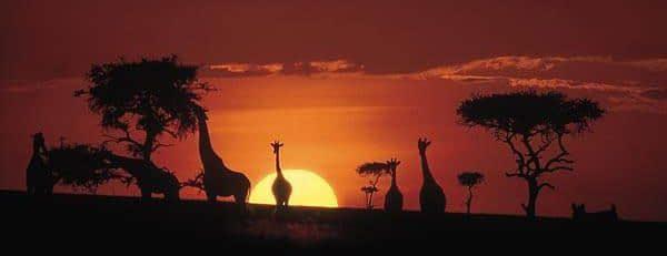 Masai Mara, Lake Nakuru & Amboseli safari