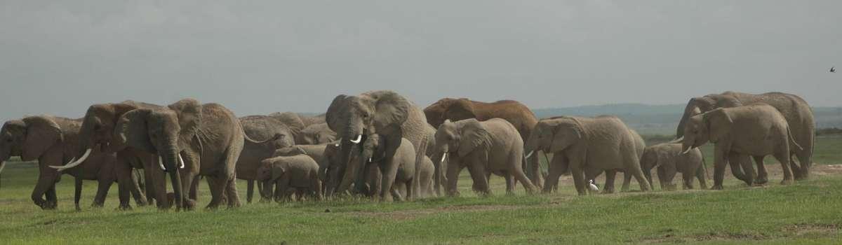 Amboseli,Lake Naivasha and Masai Mara Safari