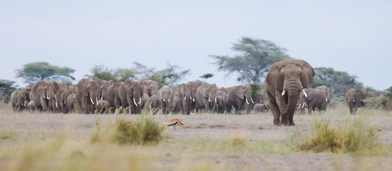 Adventure Kenya Family wildlife to the Amboseli & Masai Mara game reserves