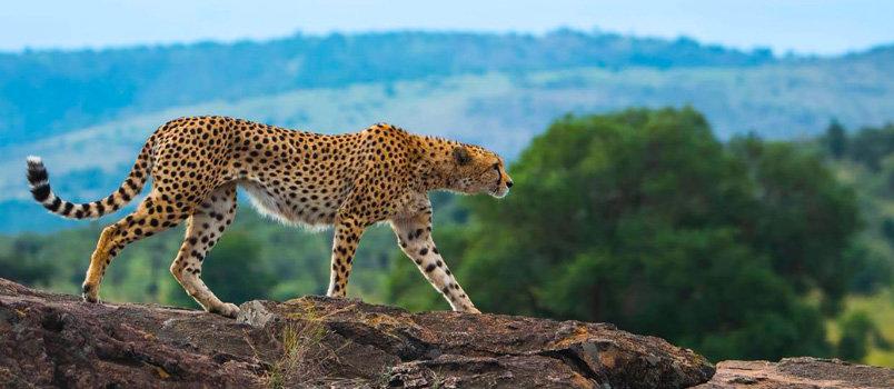 Overland trips across Kenya ,Tanzania and Uganda