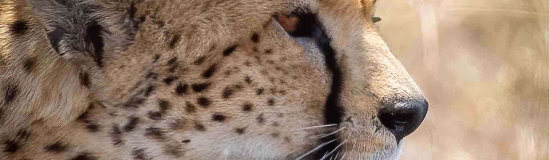 Masai Mara Luxury Lodge Safari