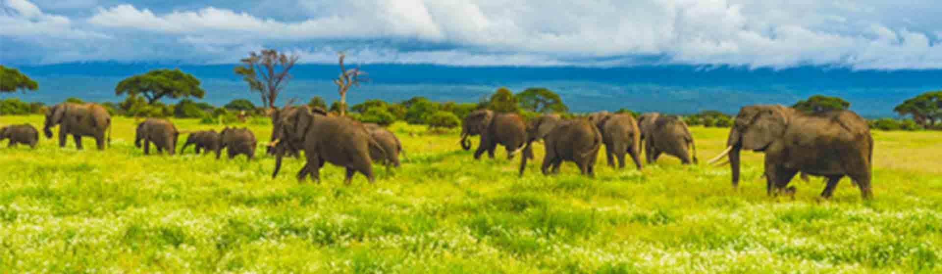 complete East Africa safari | 20 days Wildlife safari in East Africa |Asili Adventure Safaris