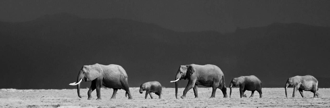 8 days Kenya photographic safari to Amboseli National park and Masai Mara national reserve