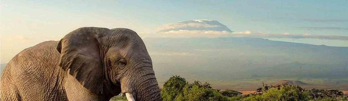 Kilimanjaro Tanzania Wildlife safari