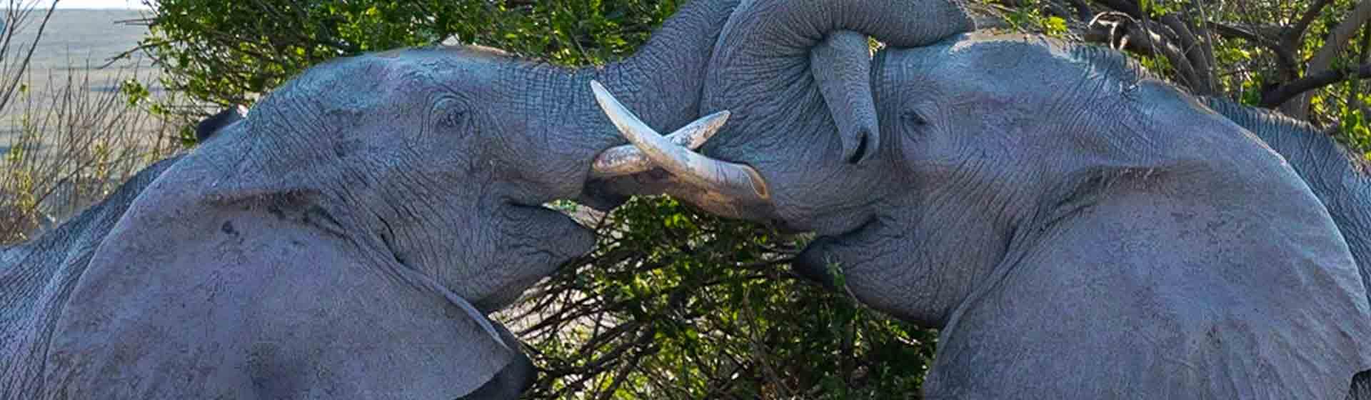 tsavo national game park elephant herds | Discover Kenya wildlife Tour
