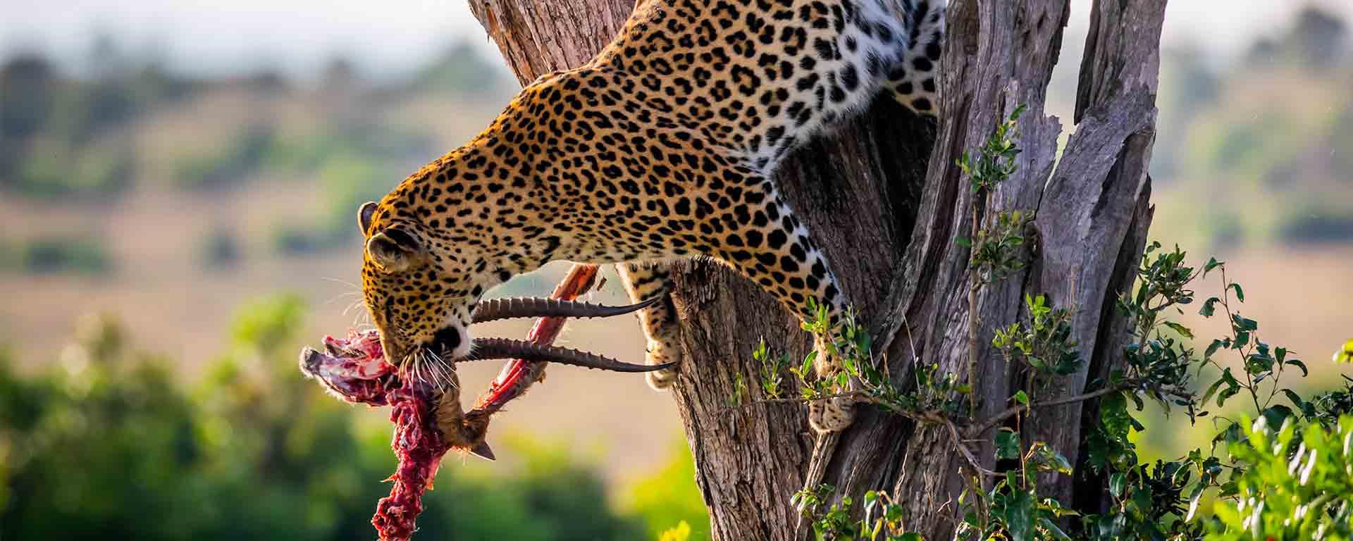 cheetah Asili Adventure Safaris Ltd