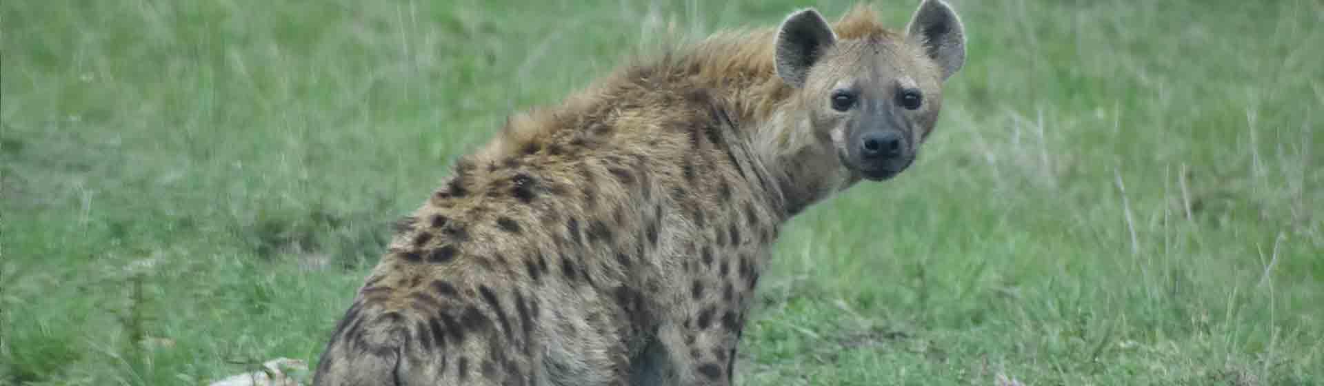 Affordable Samburu, Lake Nakuru, Masai Mara safari