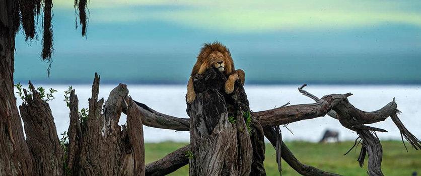 Kenya and Tanzania combined safari