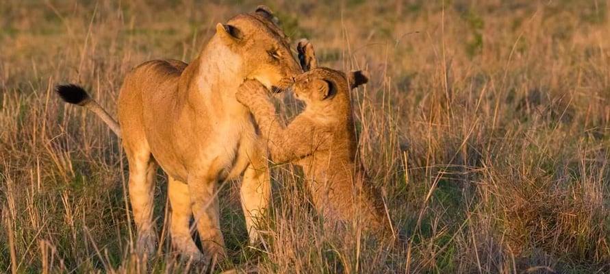 Masai Mara national reserve safari packages