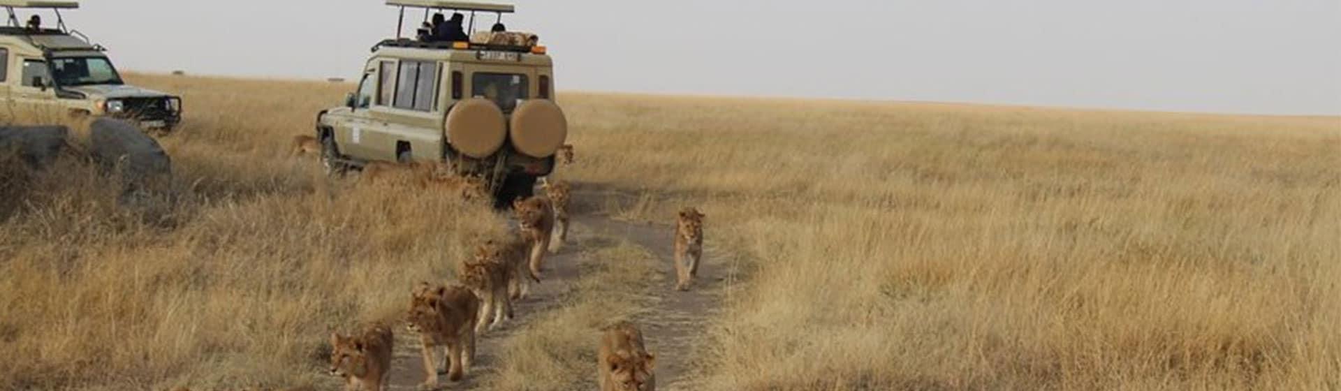 game viewing in Serengeti