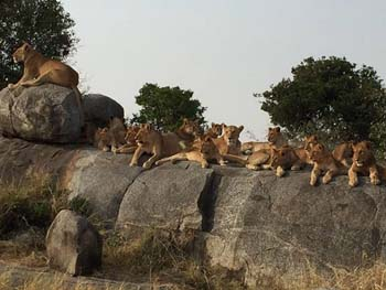 East Africa safaris and Gorilla trek