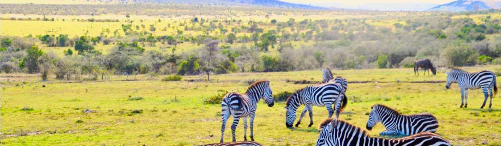 Game drives and activities in Masai Mara