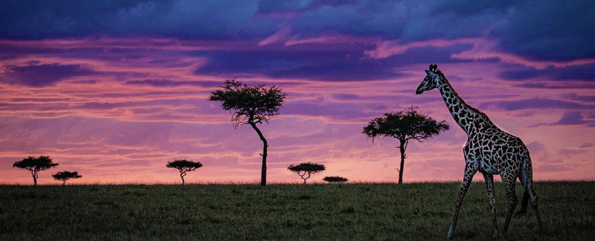 Best of Kenya and Tanzania Game Parks & Rwanda Gorillas trekking safari