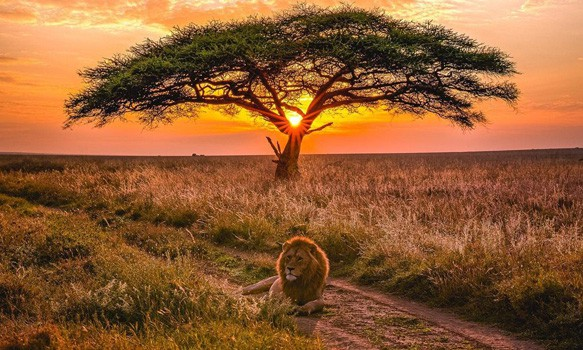 Affordable Safaris in kenya & Tanzania | Budget Safari Packages in Kenya