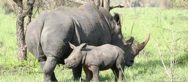 Kenya and Tanzania combined luxury safari at Ol Pejeta conservancy