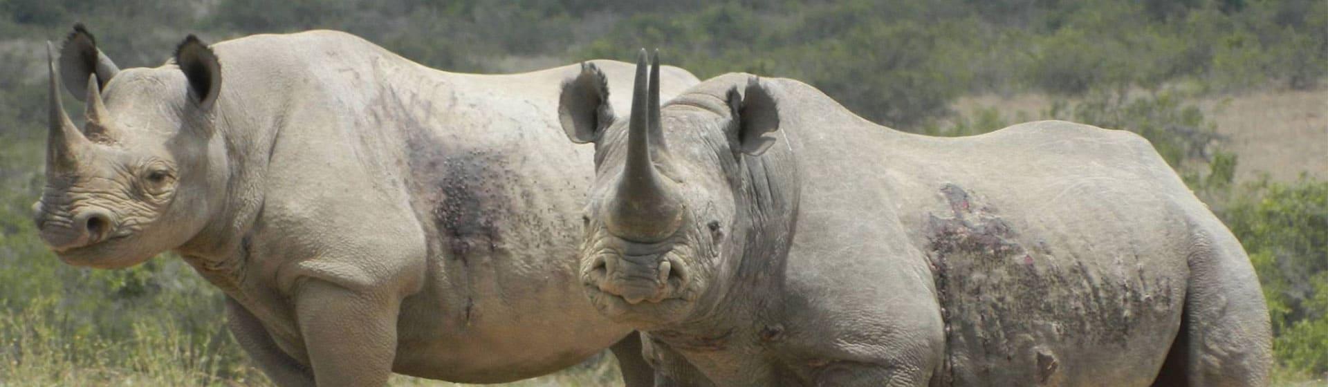 Kenya safari to Ol Pejeta conservancy