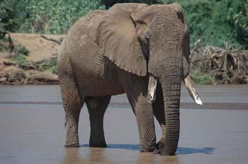 Kenya budget safari to Samburu, Lake Nakuru and Masai Mara national reserve