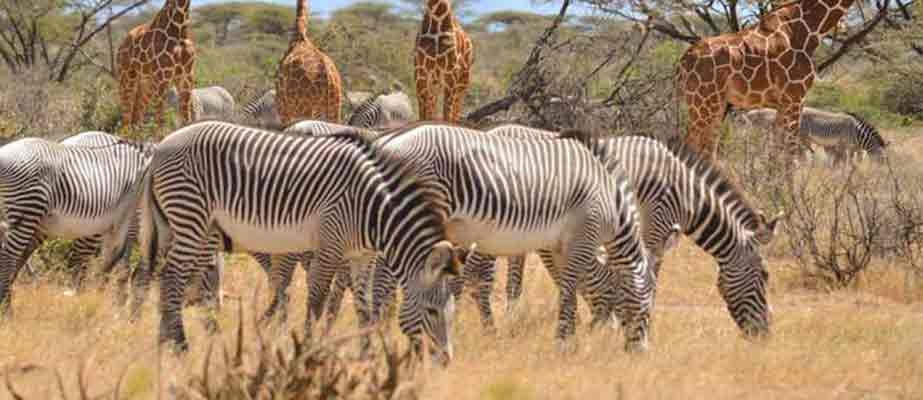 Kenya and Tanzania wildlife safari |Samburu national park