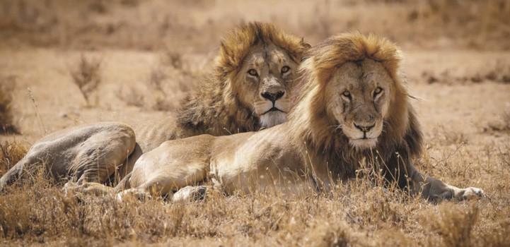 Scheduled group safari