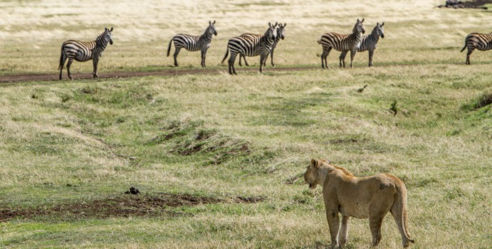 Group tour to the best of Kenya and Tanzania national parks and reserves