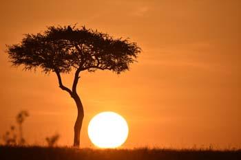 Mount Kenya trek, Kenya wildlife safari and beach holiday