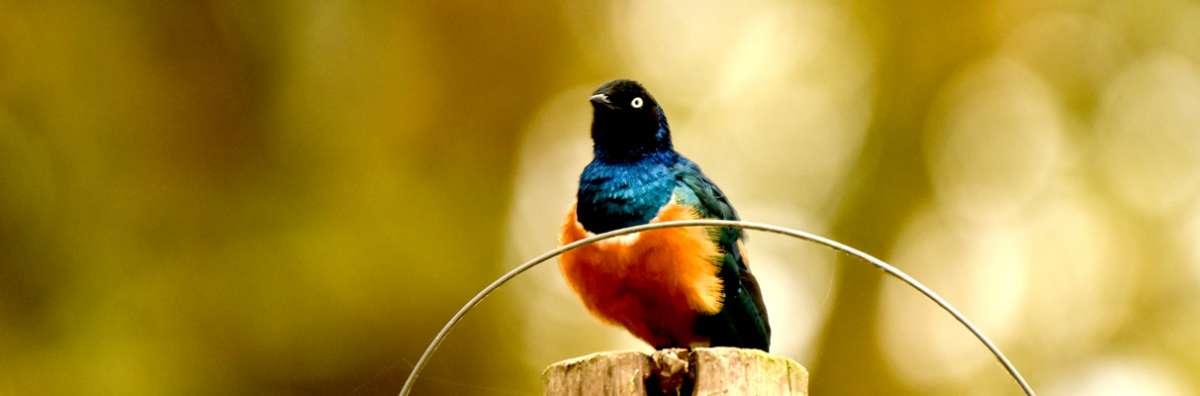 Bird watching tours in Kenya