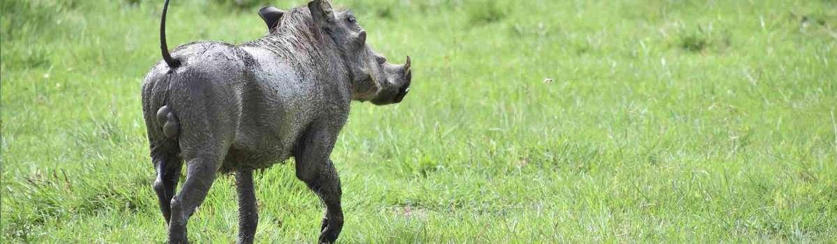 Tanzania wildlife safari | Lake Manyara-Serengeti-Ngorongoro