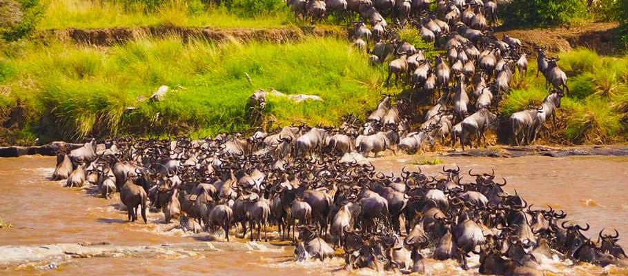wildebeest migration safaris in Kenya & Tanzania | Asili Adventure Safaris