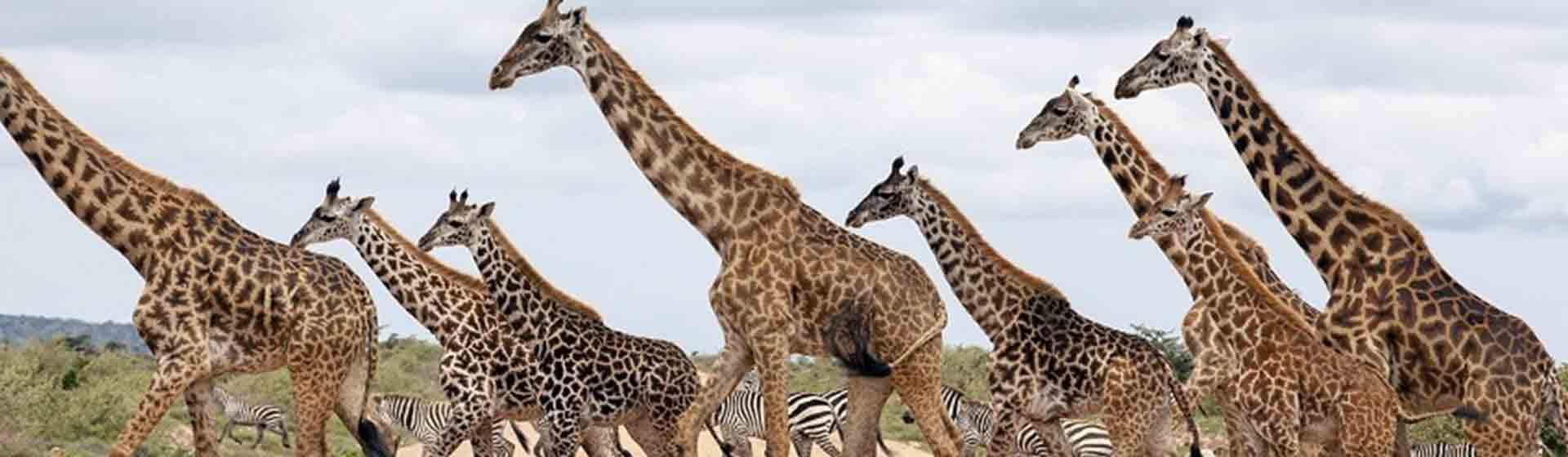 Best of Kenya Wildlife photography safari