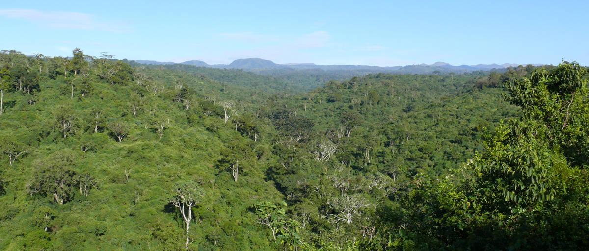 aberdare forest
